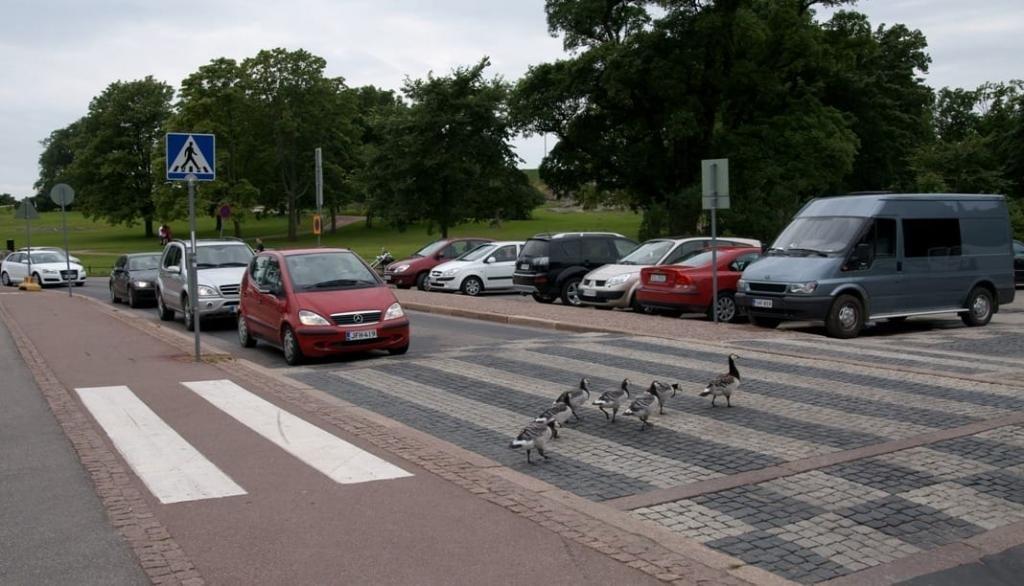 какой штраф за остановку на пешеходном переходе